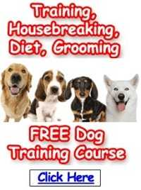 Free dog Training
